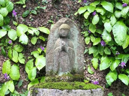 鎌倉 東慶寺のイワタバコ