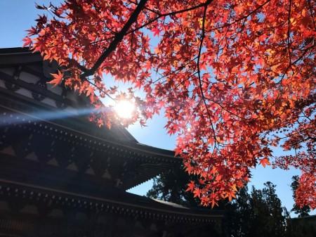 鎌倉 円覚寺 仏殿と紅葉