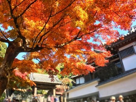 鎌倉 円覚寺正続院の紅葉