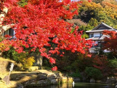 鎌倉 円覚寺 妙高池の紅葉
