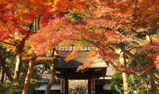 鎌倉 円覚寺 居士林の紅葉