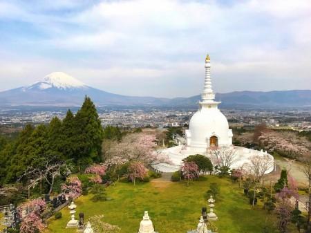 御殿場平和公園の桜と富士山と仏舎利塔