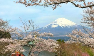 御殿場平和公園の桜と富士山