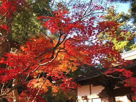鎌倉 覚園寺の紅葉