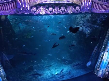 新江ノ島水族館 ナイトワンダーアクアリウム2017 海辺で見つけた不思議な物語