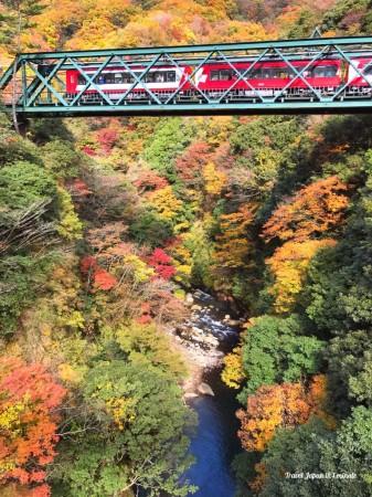 箱根早川橋梁(出山の鉄橋)の紅葉と箱根登山電車