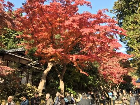 鎌倉 円覚寺の坐禅会の列