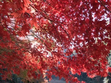 明月院の本堂後庭園の紅葉