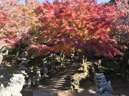 建長寺 半僧坊の紅葉