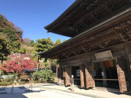 建長寺 法堂と紅葉