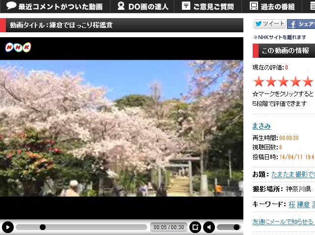 鎌倉でほっこり桜鑑賞